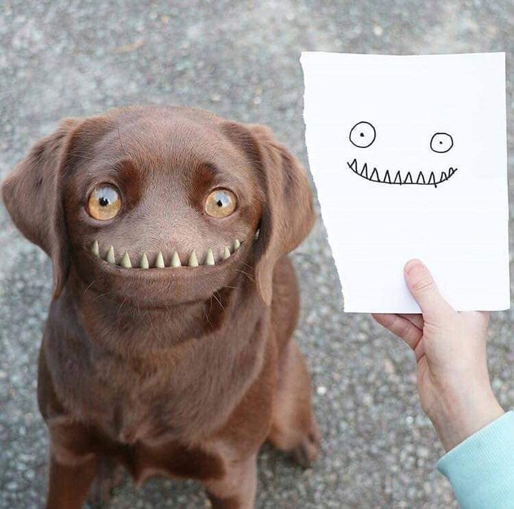 My dogs face, creative kids